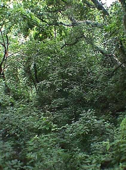 Qu es un bosque seco tropical for Que significa dibujar arboles secos