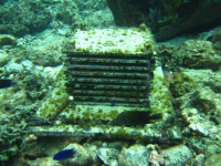 """Monitoreo de biodiversidad con """"Extructuras Autonomas de Monitroeo de Arrecifes"""