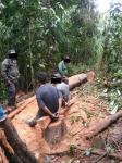 Personas detenidas talando árboles de Reserva Forestal en Upala