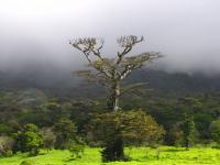 Cierre de sitios turísticos de ACG por llegada de Huracán Otto
