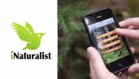 Aplicación telefónica para el registro de vida silvestre atropellada en carreteras