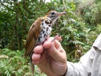 Proyecto de Aves Migratorias (BioAve)