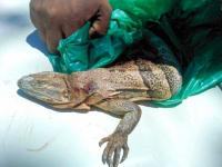 Detenidos por cacería ilegal en Corredor Biológico Las Morocochas, Liberia Guanacaste
