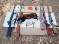 Decomiso de armas de fuego a cazadores furtivos